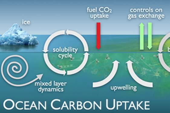 carbon ocean cycle diagram