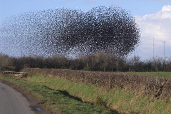 photo of a flock of birds